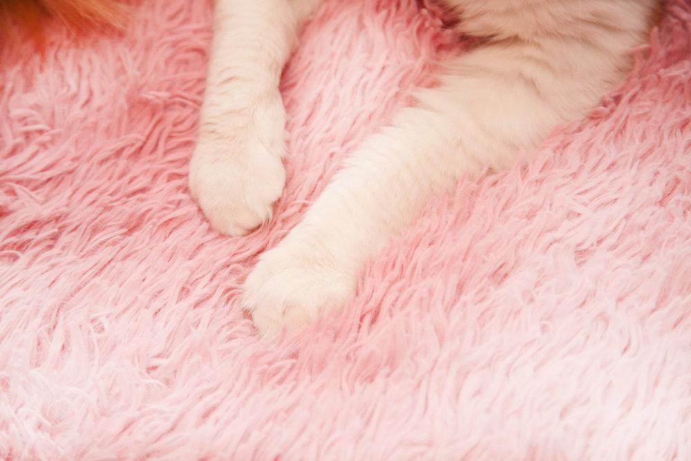 Буду обнимать этими лапками - Если я - Ваш кот, позвоните пожалуйста Юрию097 933 38 70.