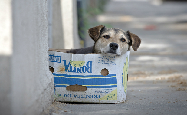 Romania_Stray_Dogs.jpg