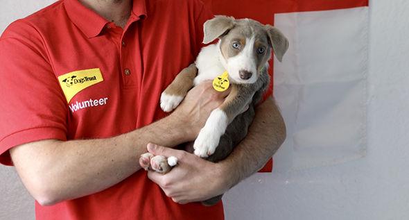 Dogs-trust-shrewsbury-puppies-1416101.jpg