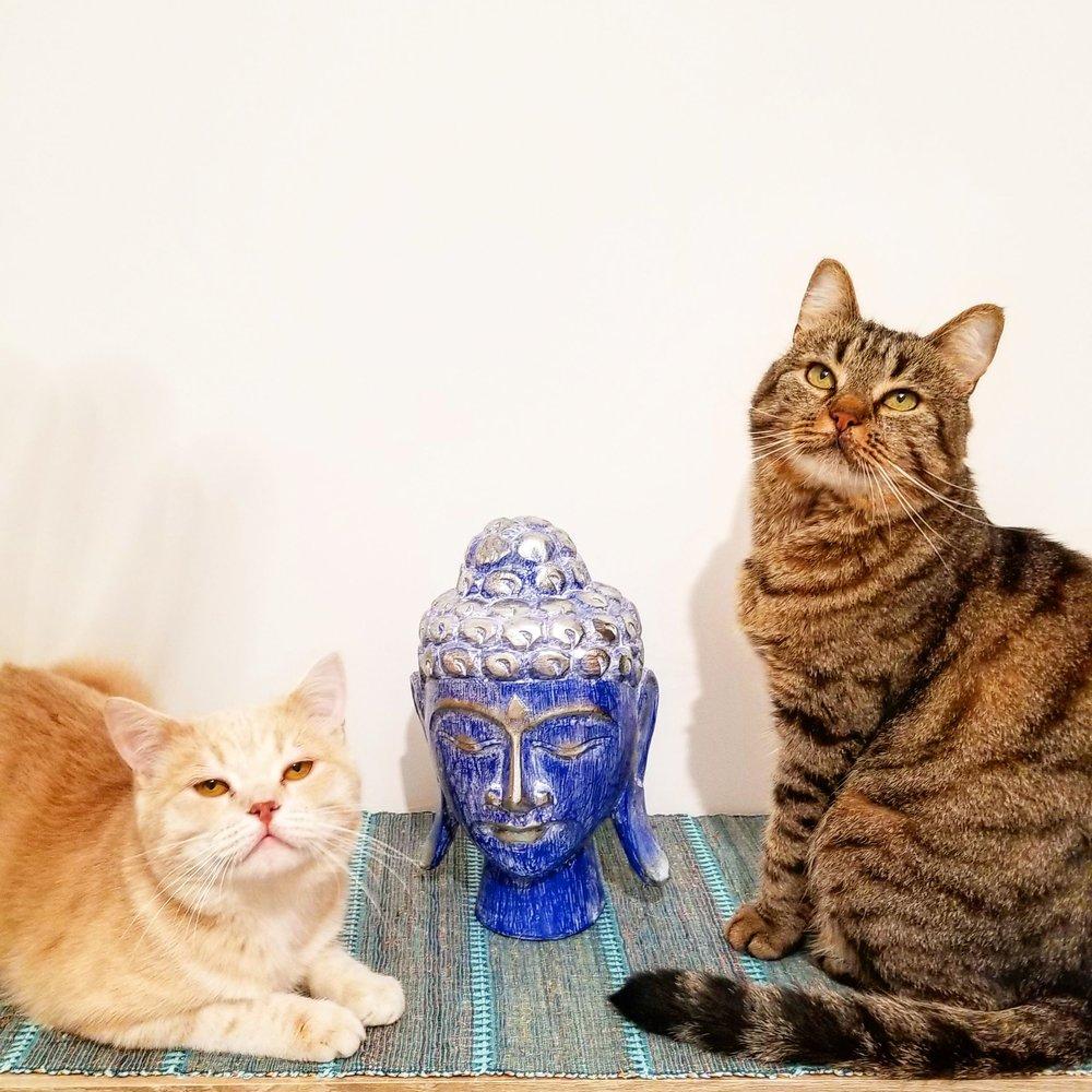 Если вы замечаете, что с котом что-то не так, надо сразу тащить его к врачу.Но это надо делать с любым котом. -