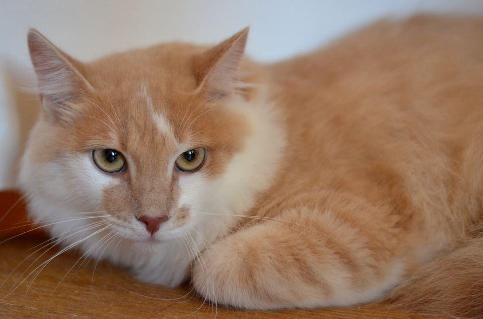 Ноктюрн - уверен: если в детстве не социализировать котенка, то вырастет он кусючим (хотя и таким можно перевоспитать)