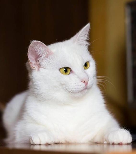 """Умка - так не делает, но знает, что многие котаны могут кусать в попытке показать, кто тут """"босс"""" :)"""