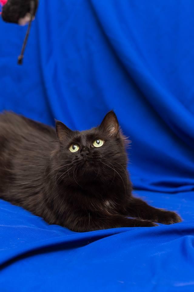 Ари - знает, что от шумной и активной игры котики могут перевозбудиться, от чего они еще полночи будут гонять по квартире и кусать всех, кого видят.
