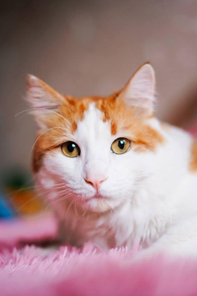 Люций - слышал, что некоторые коты и кошки могут кусать людей от переизбытка чувств. Когда слишком сильно любишь и не знаешь, как это показать - просто кусай.