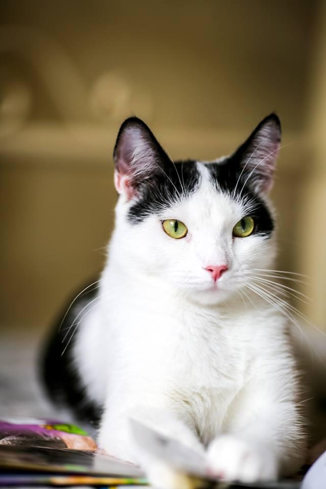 Тирамису - - кот ученный и начитанный, поэтому знает: если в прошлом животное жило на улице и его там обижали люди, то даже попав в хорошую семью, оно сперва может показывать свою агрессию.