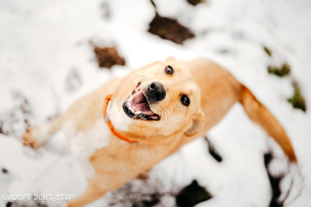 Лисси  радостно сообщает, что теперь ваша жизнь изменится. К лучшему!  Подопечная  Adopt Don't Stop