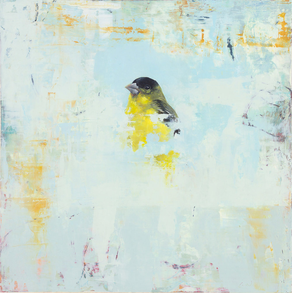 Lesser Goldfinch  2018 oil on panel 10 x 10 inches  available at  Adam Cave Fine Art
