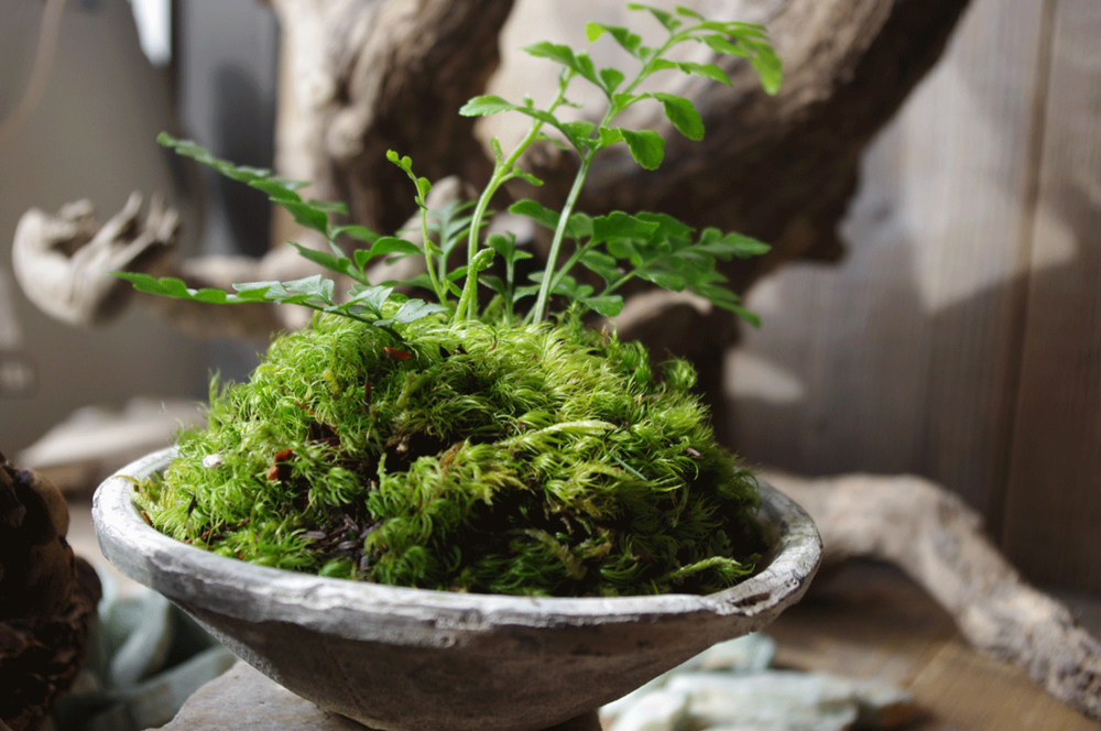 Earthenware potted fern and mood moss
