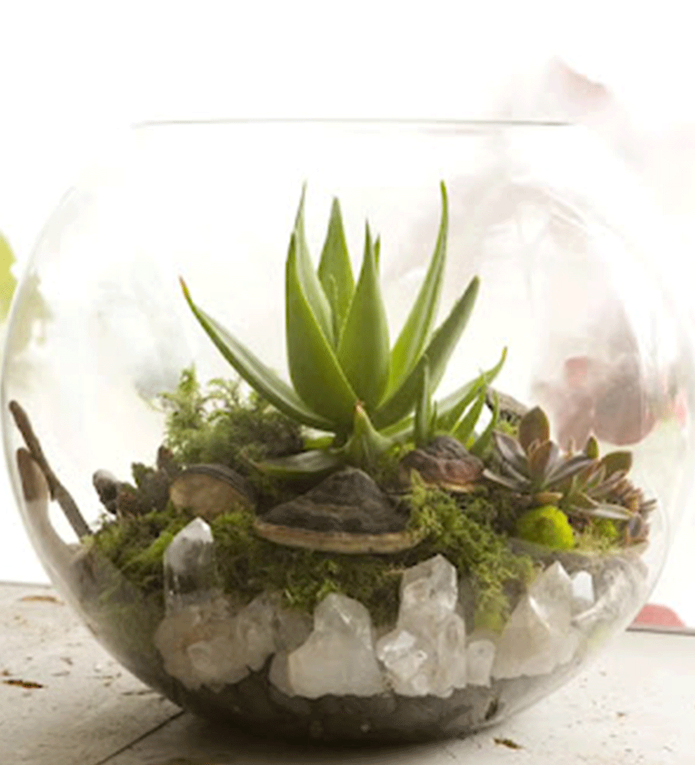 CUSTOM TERRARIUMS  Let us create a custom Terrarium design for you. Whether it is a centerpiece for your business or a special gift for a friend, we work to bring your vision to life within a unique glass world. For ore information on our Custom Designs, CLICK HERE
