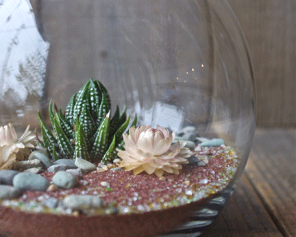 1 . Learn to make a terrarium in a fun social setting.