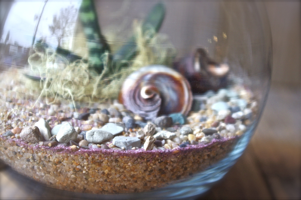 Good Earth Terrarium design