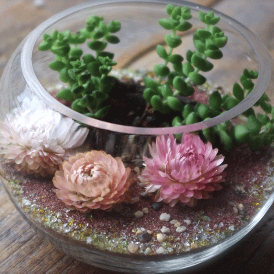 BLOSSOM TERRARIUM KIT  Comes with all materials & instructions to make and take care of. Small $25, Medium $35. Purchase Here.
