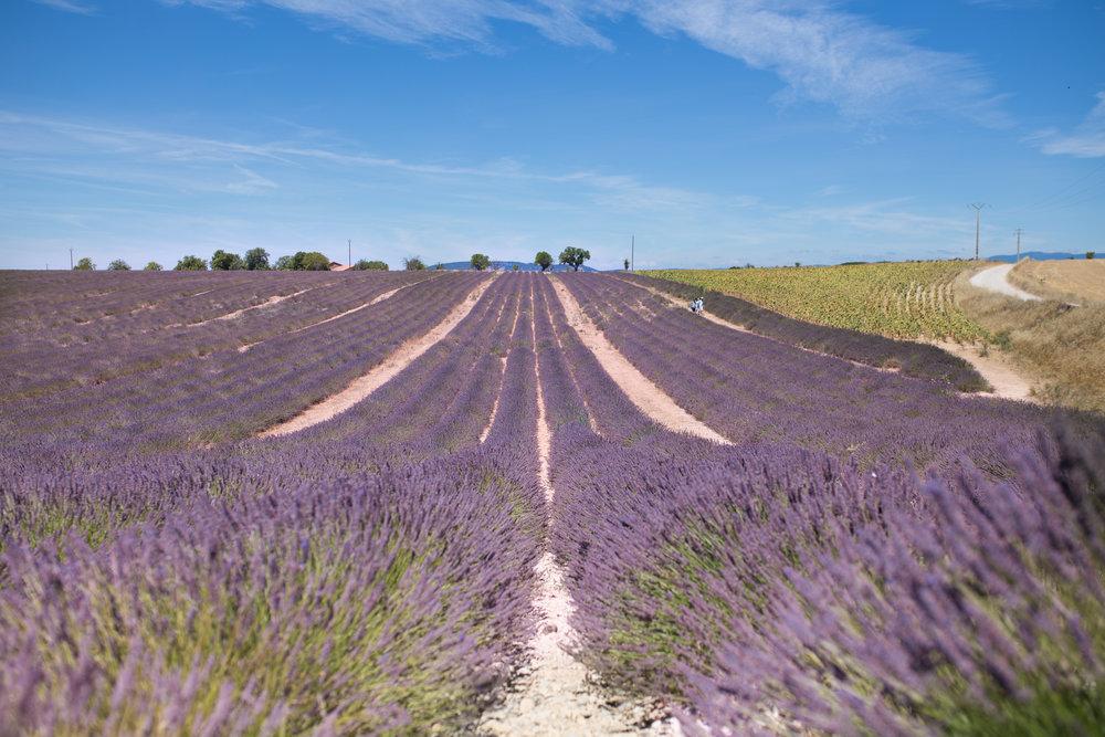 Provence2017-6.jpg