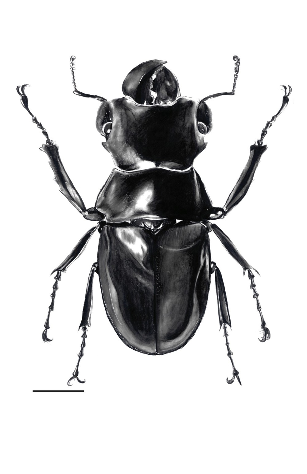 beetle edited.jpg