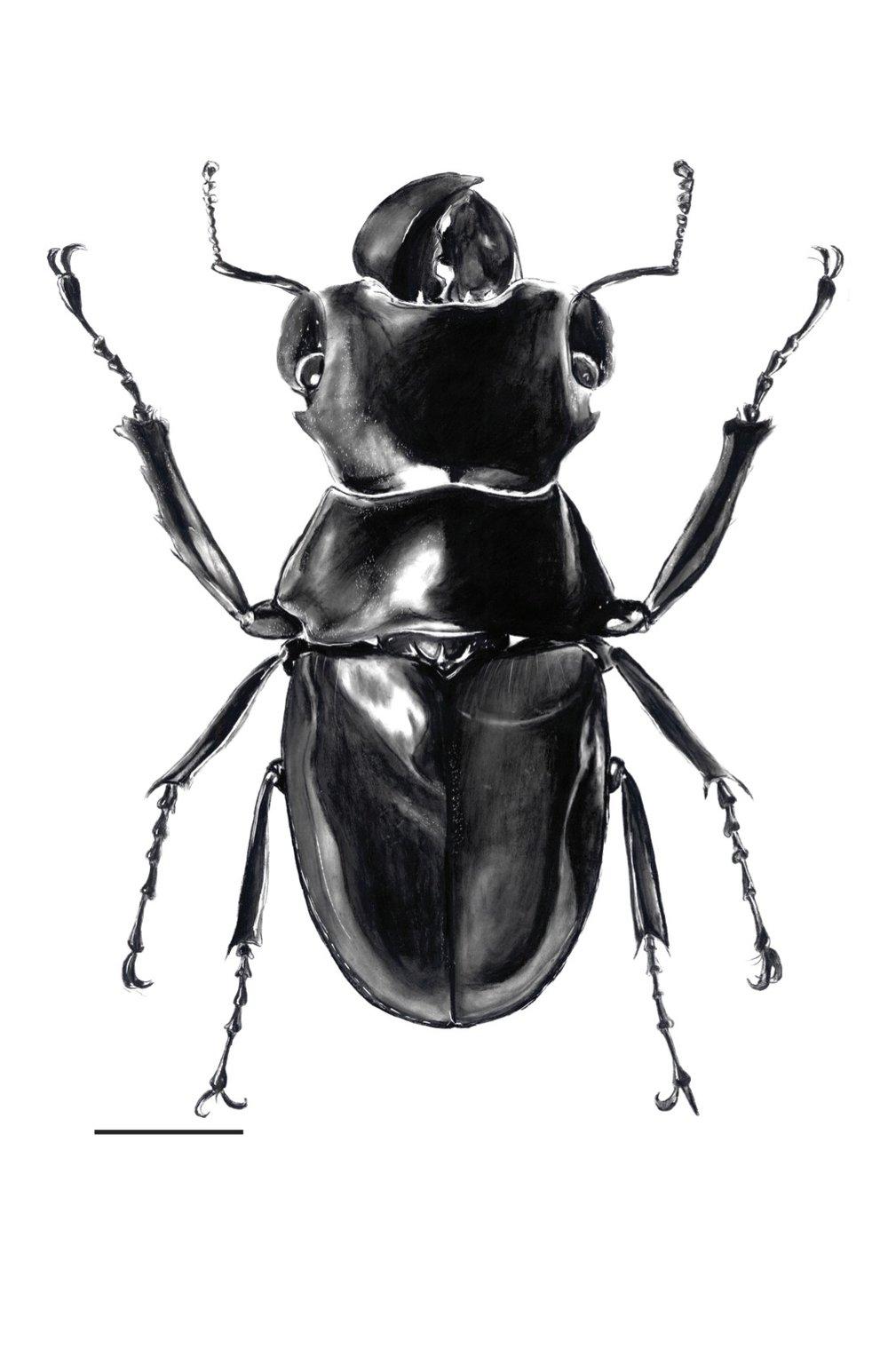 beetle edited.jpg