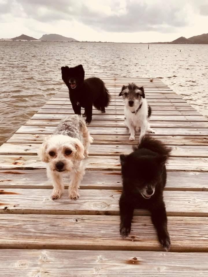 pups on dock.jpg