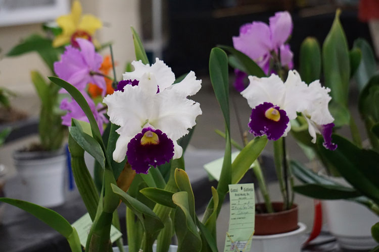 Orchid-Society_photo_2.jpg