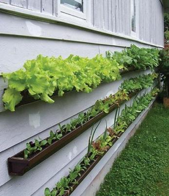 gutter gardening-1.png