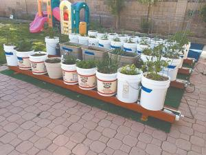 container-gardening-image-1.jpg