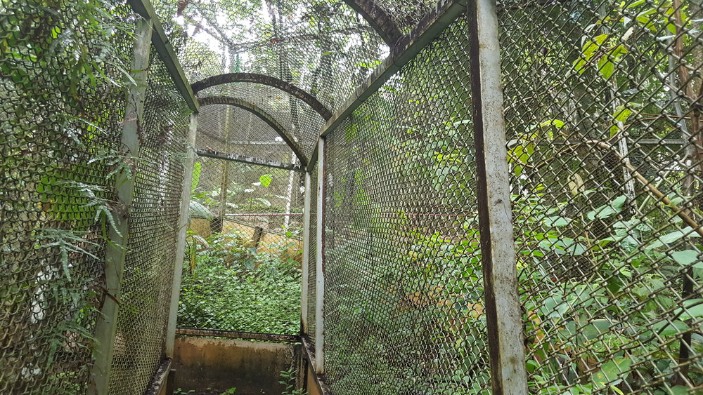 Large squirrel monkey (mono titi) enclosure