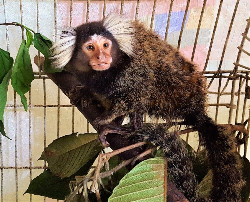 KSTR Monkey.jpg