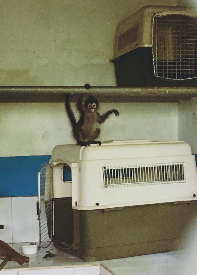 erika arcas monkey.jpg