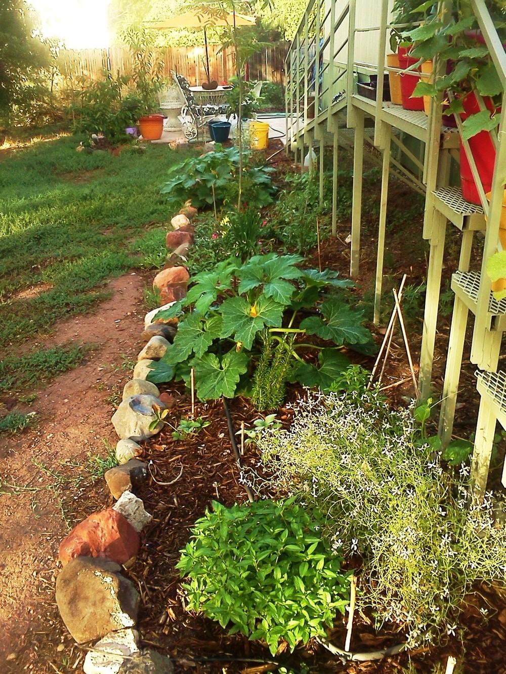 garden July 2015 005.jpg