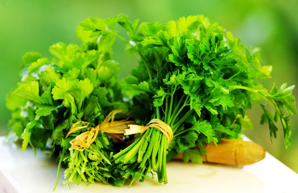 11536367 - aromatic, background, brightly, bunch, bundle, cilantro, close, color, cook, cooking, coriander, cuisine, culinary, curly, diet, eating, foliage, food, fragrant, fresh, freshness, garnish, green, health, healthy, herb, herbal, horticulture, ingredient, is