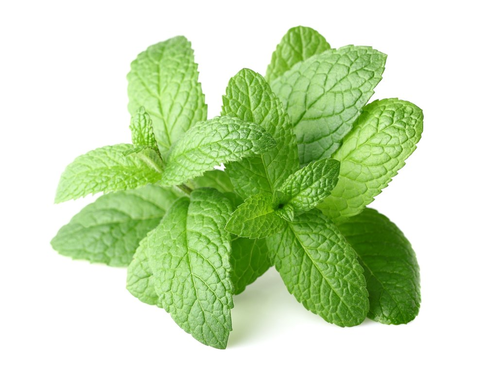 16448132 - peppermint in closeup