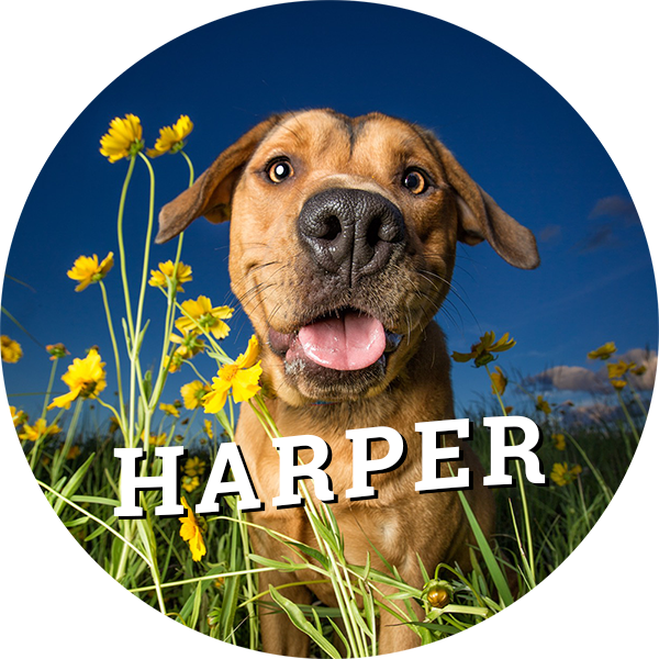 home-harper.png