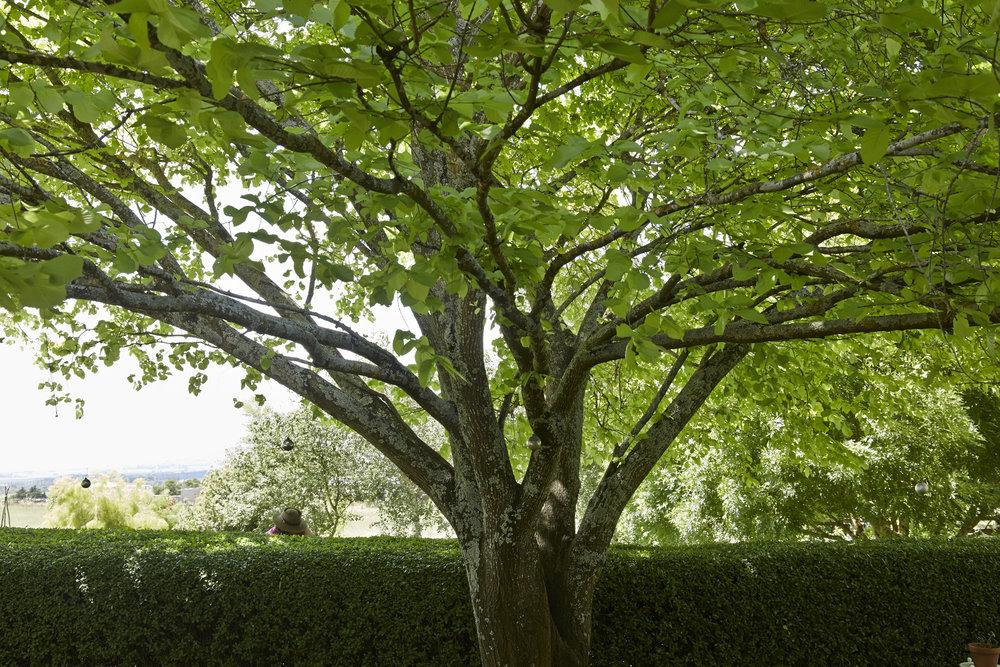 Hedgerow Kingston_077.jpg