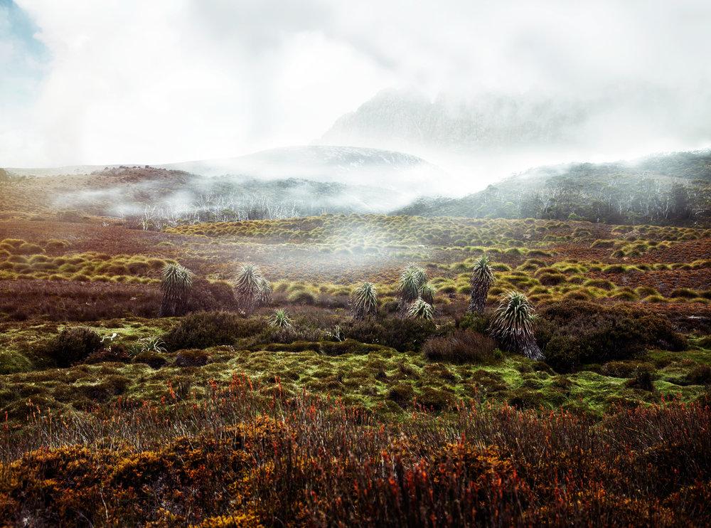 danny-Wootton-photographer-Tasmania-Cradle-Mountain_4.jpg