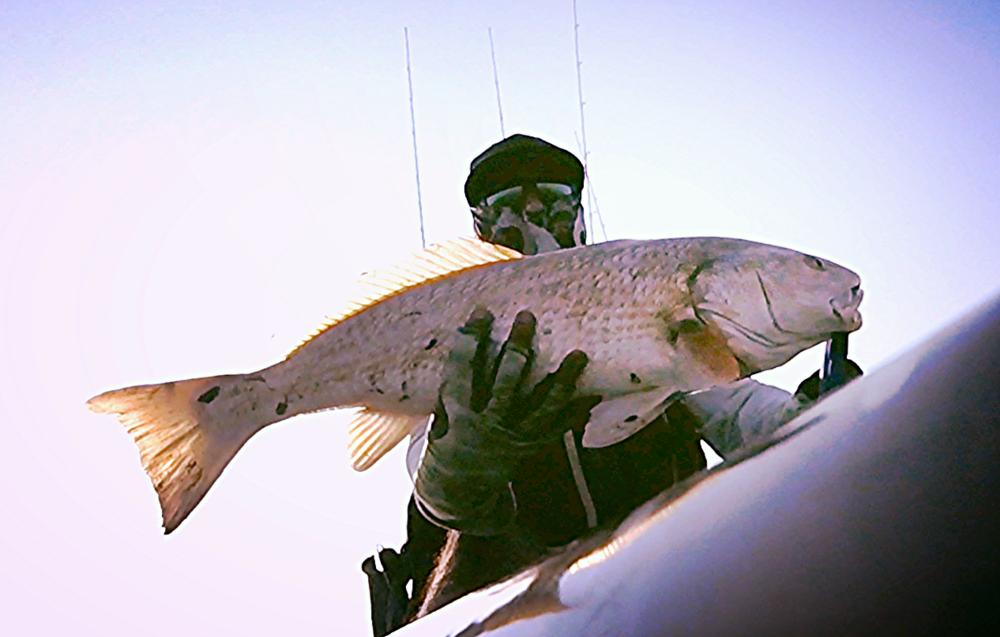 "26.75"" Redfish"