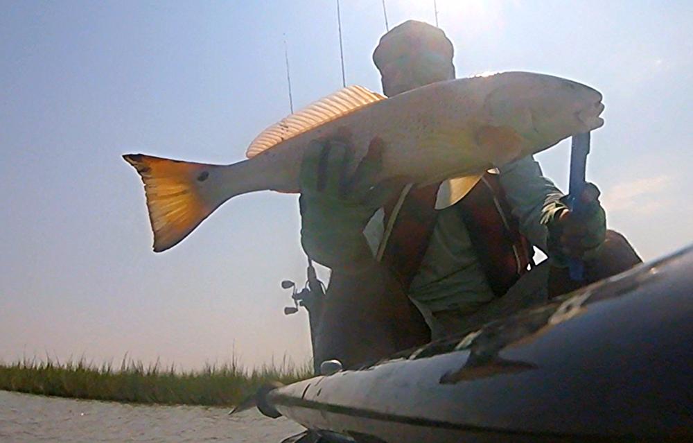"24.5"" redfish"