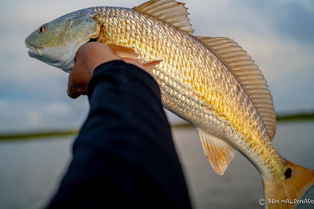 Decided to make a quick afternoon trip to a nearby marsh. A couple hours of fishing and a couple redfish. . . . . #redfish #kayak #kayakfishing #hobiefishing #hobie #sonya7iii #hobiefishingteam #texas #galveston #marsh