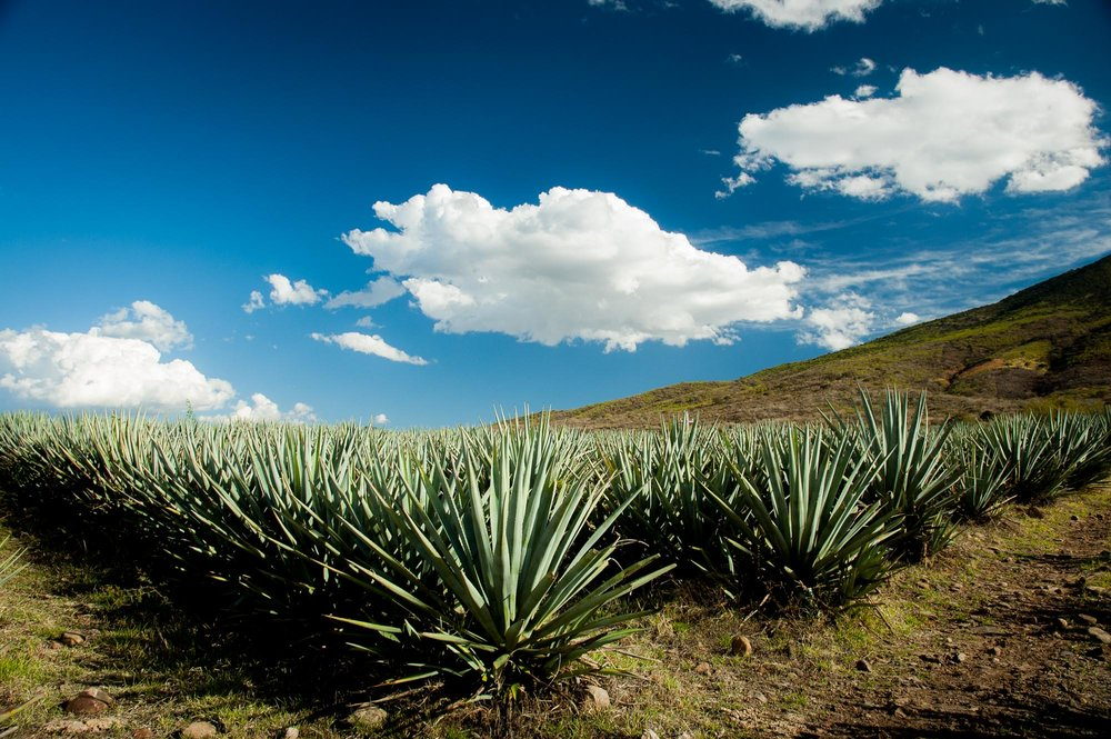 'Succulent Mexico' Series | Mexico