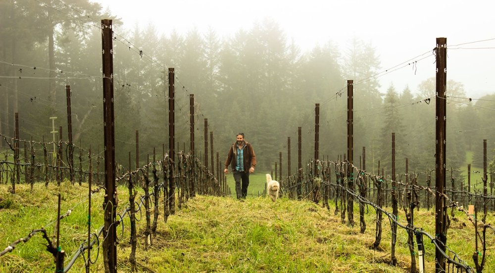 Vineyard tour and tasting with Greg Adams at his ridge top estate vineyard in Sebastopol, CA overlooking the town of Freestone - Saturday, May 13 | 11:00am - 2:00pm