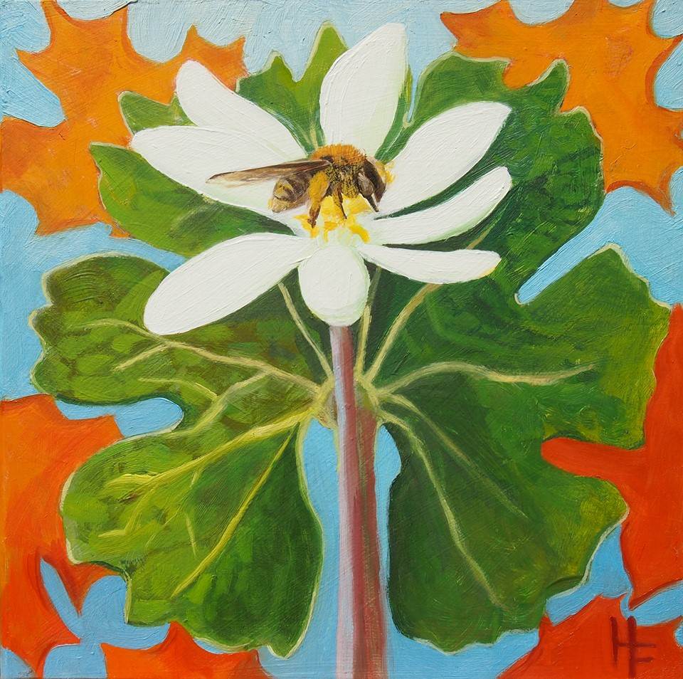 "Bloodroot and Mining Bee   2017 7""x7"" Oil on Board Available  $320   Limited Edition Giclee Prints Available   The Mining Bee is an important native insect which pollinates Bloodroot plants. Daintily set atop the white bloom, the bee collects pollen which sticks to its furry body."