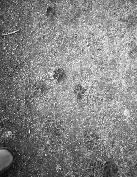 Dog Footprints065_edit.jpg