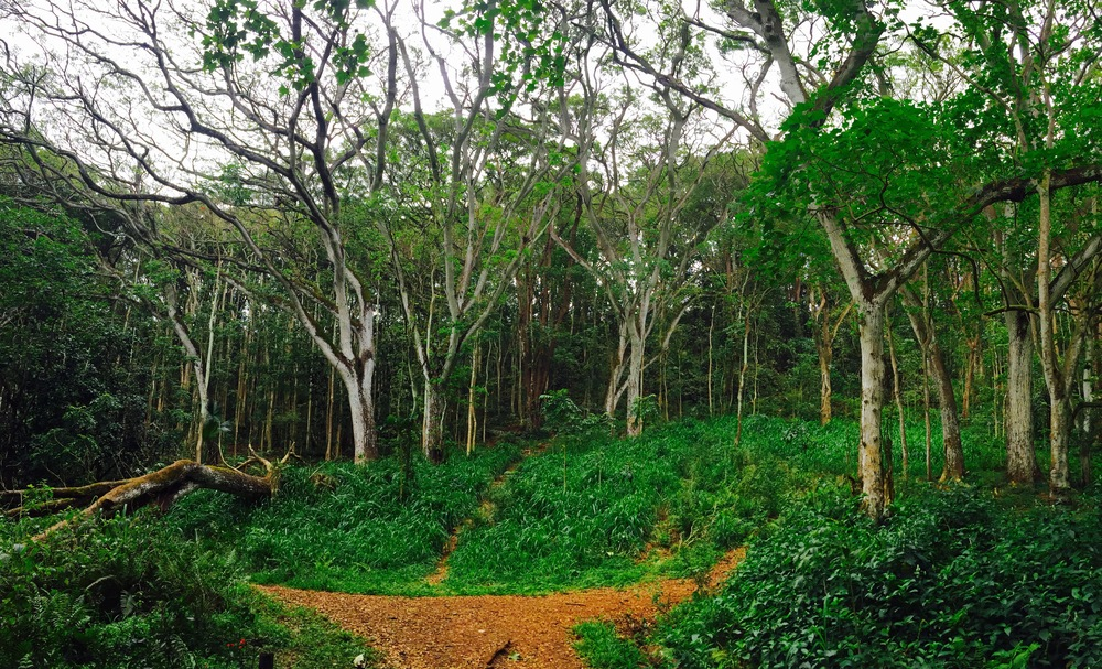 The enchanted forest, Hawaii, April 2016
