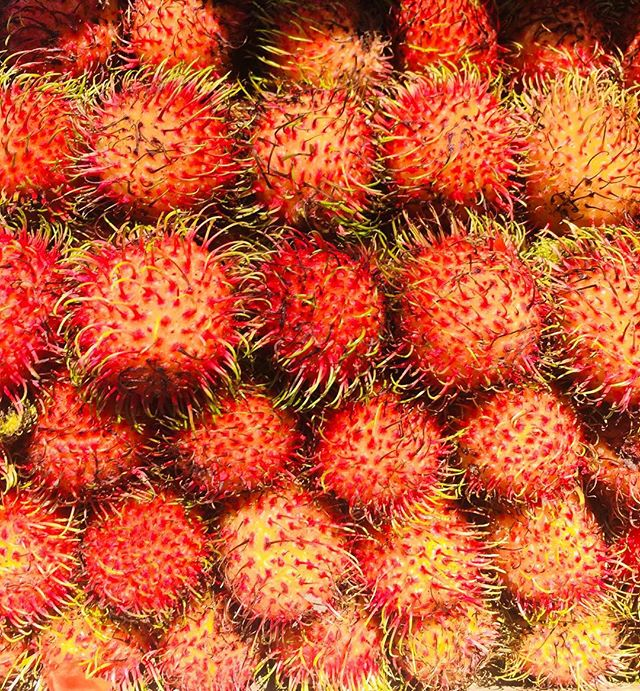 How can you compare this to taking superfood supplements?  Rambutan, one of the few fruit that has a wiki-how to eat page dedicated for it! 😄❤️ This lychee looking tropical fruit is an absolute delicacy if you're a fan of the jelly texture. It's packed with nutrients, minerals, vitamins and polyphenols that are absorbed a lot better when they're eaten together and that's why I'd prefer eating whole  over supplements!  Some of the incredible fruit found in Mexico!  كيف منقدر نقارن حبوب الڤيتامينات و المعادن بفاكه بهاي الألوان و الأشكال الرهيبة؟  رومباتان، نوع فلكه استوائية غريبة و لذيذة جداً ملاينة ڤيتامينات و معادن و أشياء أخرى بتفيد الجسم بشكل كبير اذا بتتاكل بشكل كامل. هذه أحسن طريقة إنّو ناخد الفائدة من المعادن و الڤيتامينات لما مناكل الفاكهة بأكملها و مو من حبوب! . . . . . #ayurveda #ayurvedafood #ayurvedicfood #yogi #yogaeverydamnday #health #holisticwellness #wellness #fitness #healthy #vegetarian #healthyfood #happiness #love #peace  #ranaayu #purefood #cleaneating #travel #سفر #healthyrecipes #consciousliving #طعام #صحة #طعام_صحي #حلويات