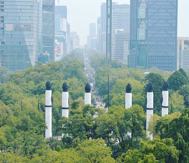 From the jungle to the city.  Mexico City, you're cool! 💚 من الأدغال للمدينة! كتير عّم بحب عاصمة المكسيك☺️💚