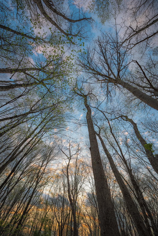 Spring Trees Up_DSC4761.jpg