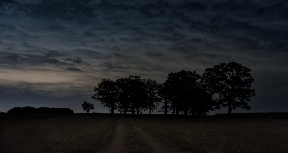 Trees at Night_DSC0064.jpg