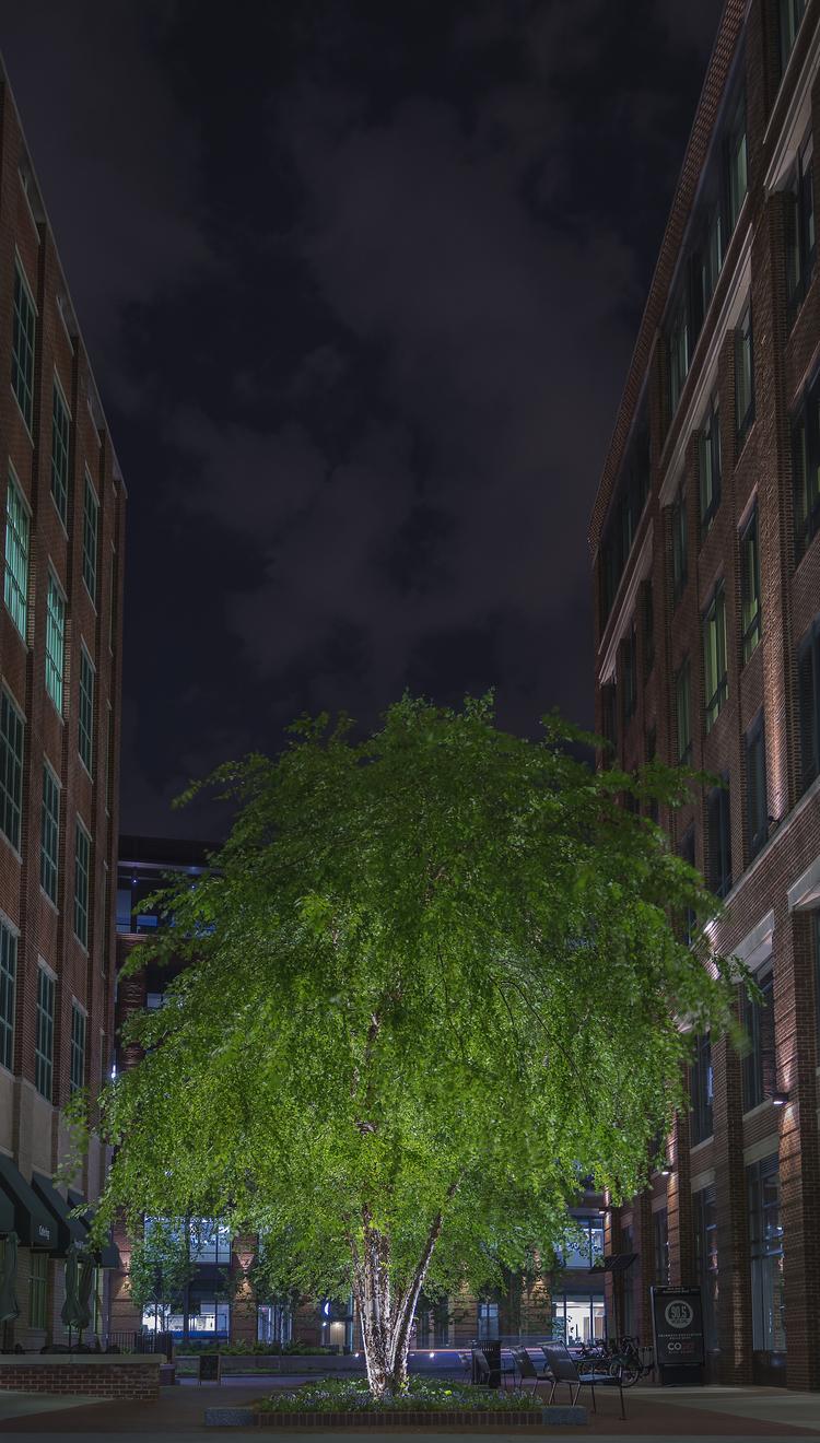 TreeTwoBuildingsNight_DSC8968.jpg