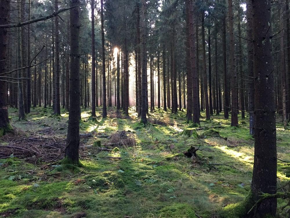 Neujahresimpressionen im Langenbacher Wald