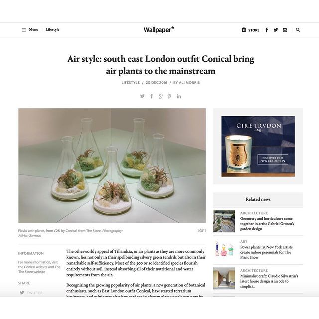 Conical featured by @wallpapermag online and in print this month! :) 📷 @adriansamson 🌿