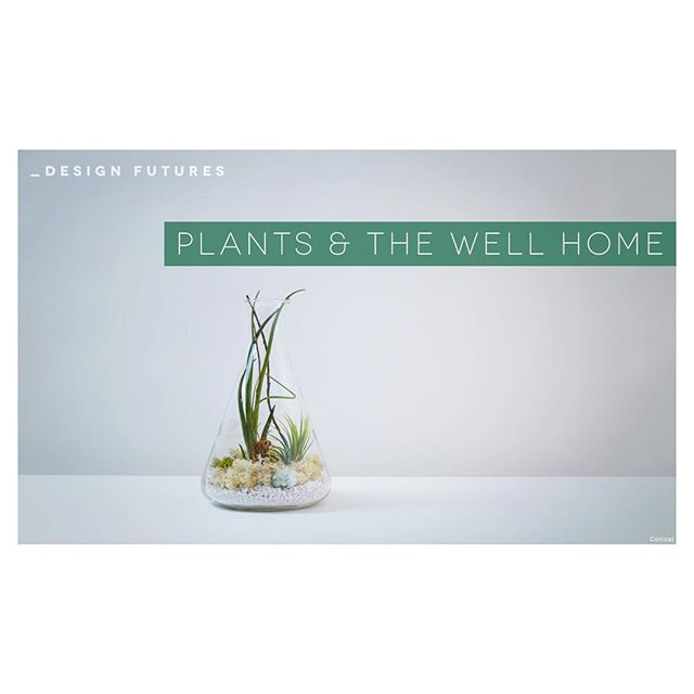 "We are featured in @wgsn new trend ""plants and the well home"" 🌿✌🏻"