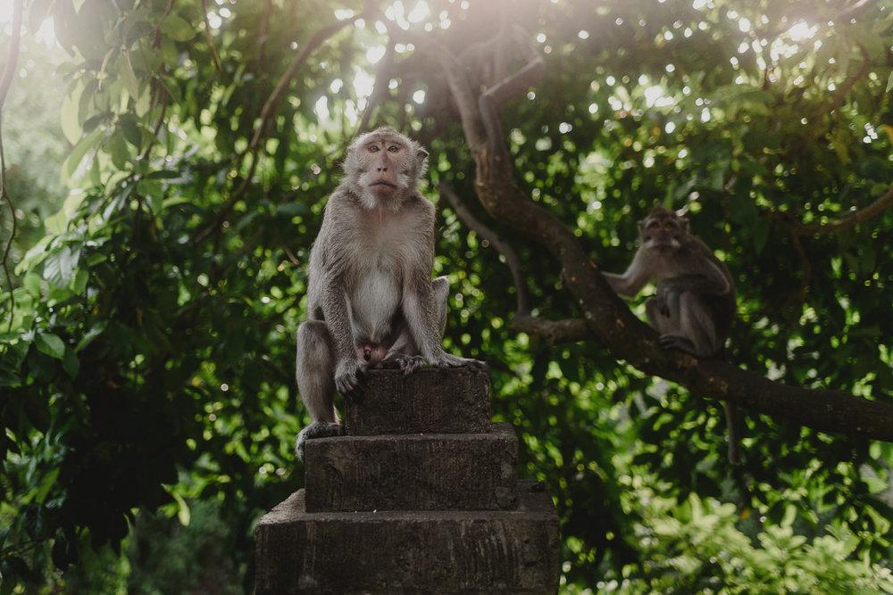 bali-travel-photography-ADS_1980.jpg