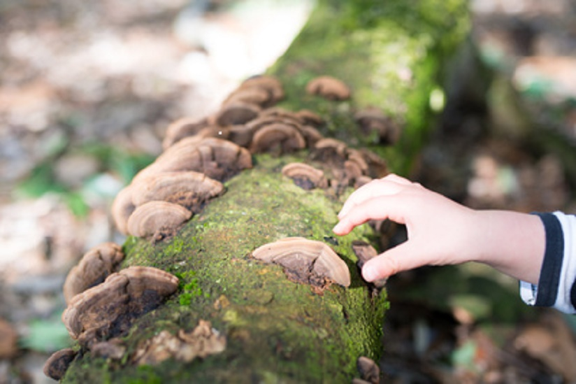 nature curious child picking fungi.jpg